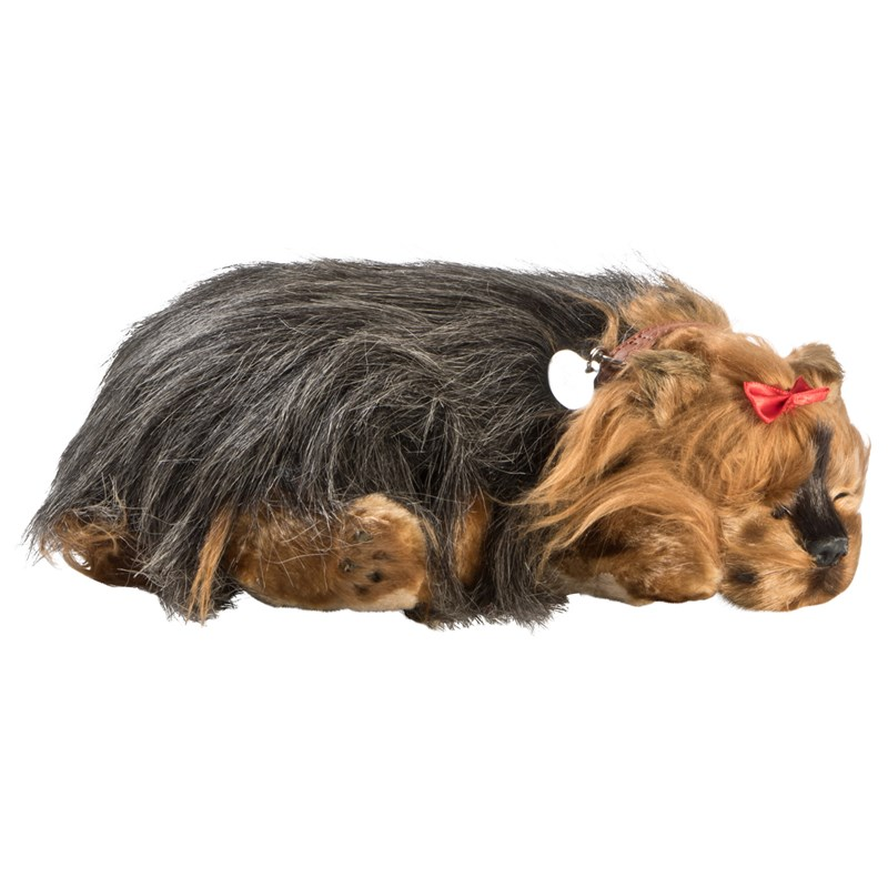 Perfect Petzzz Yorkshire Terrier 3+ years